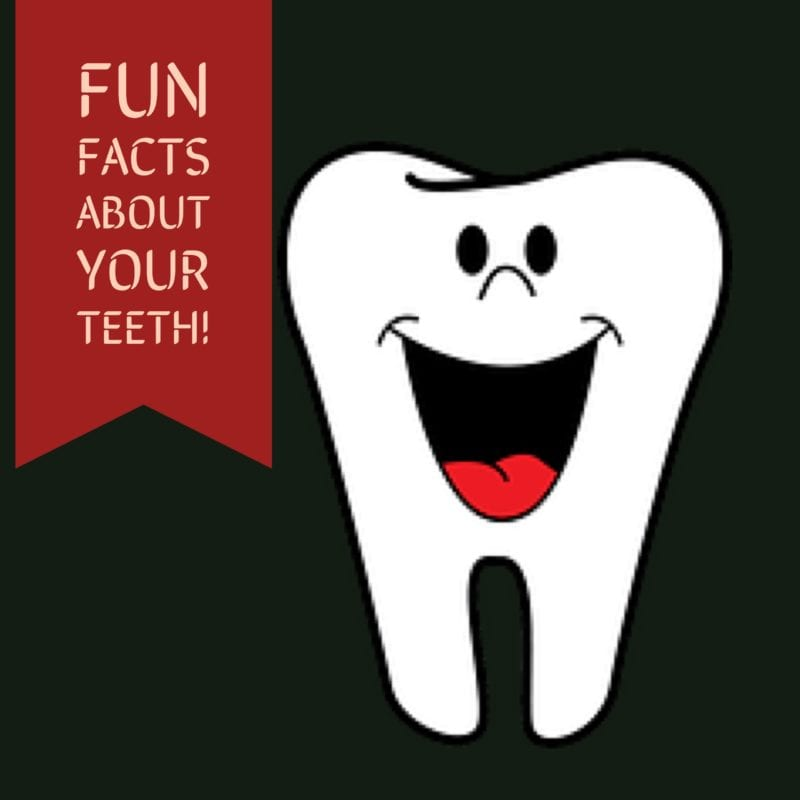 20 fun facts about your teeth the first impression